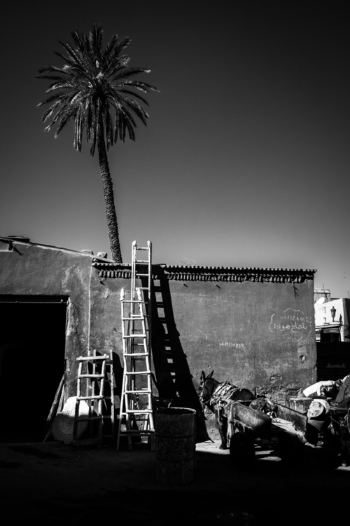 Marrakech, Morocco donkey ladde - georgios | ello