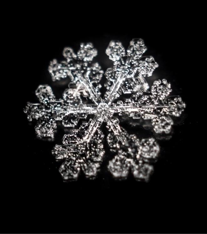 Snowflake snowflake snow nature - ecajoe | ello