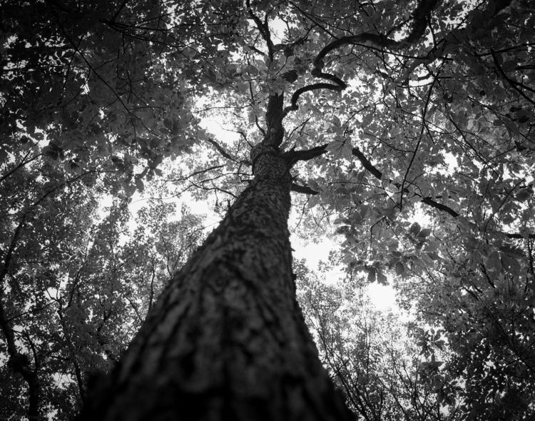Tree woods roll HP5+... mamiya  - junwin | ello