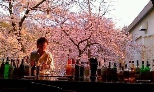 Cherry blossom eat watching che - hokushin   ello