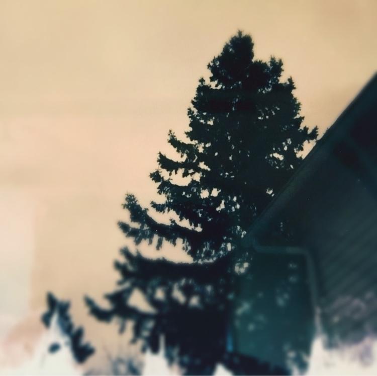Polaroid winter ElloPhoto - jkalamarz   ello