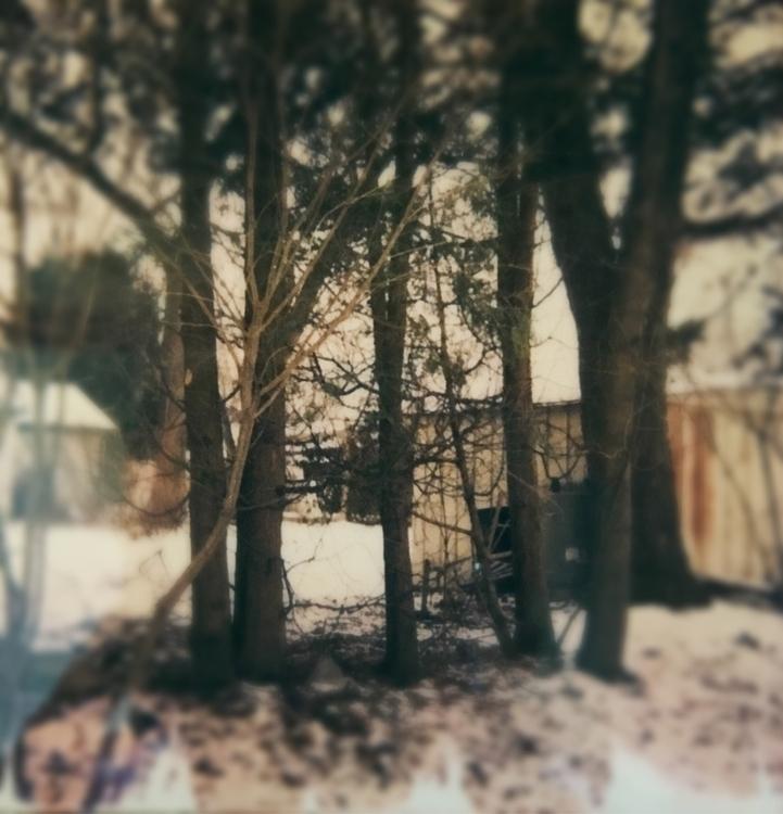 Polaroid winter trees shed snow - jkalamarz | ello