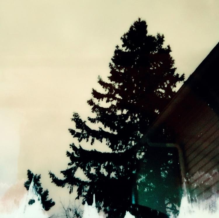 Pine Tree Winter Sky), 2017 ser - jkalamarz | ello
