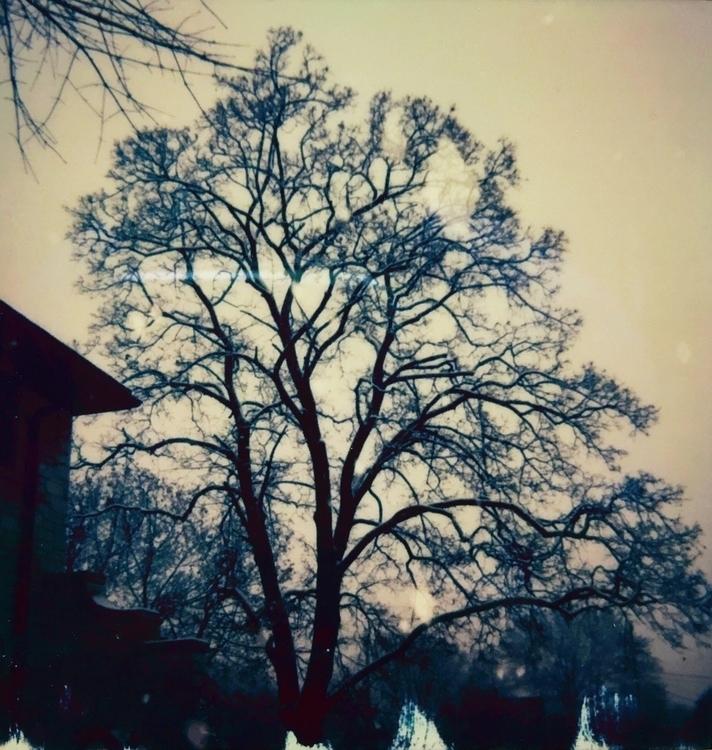 Winter Tree, 2016 series: Lo Fi - jkalamarz | ello