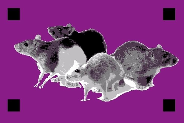 rats, urban project 2017, Bauru - celula | ello