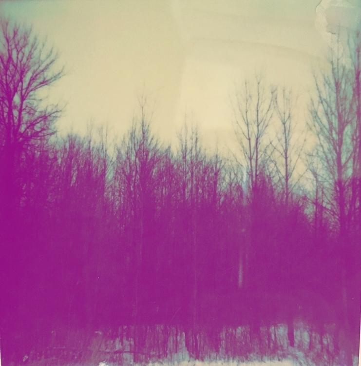 Strand Trees, 2016 Purple II. B - jkalamarz | ello