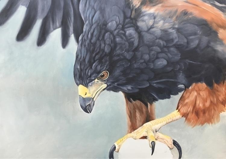 Harris hawk progress, oil cradl - bryanhollandarts | ello