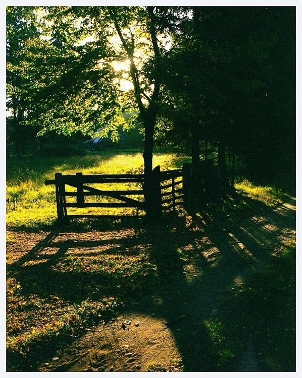 この道や 行く人なしに 秋のくれ • road autumn  - homosporocarpus | ello
