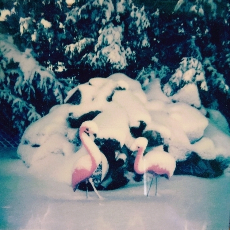 birds Midwest - Polaroid - jkalamarz | ello