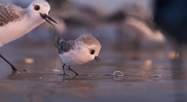 review Oscar nominated Animated - lastonetoleave | ello