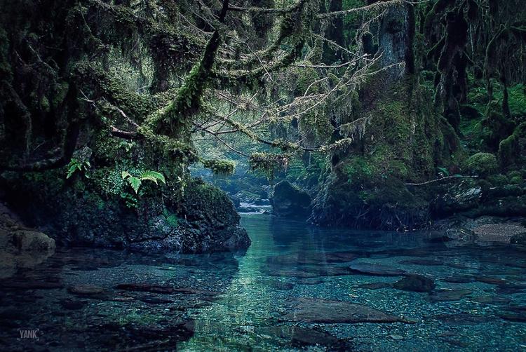 Lost Valley - Pyrénées France - jungle - yank- | ello