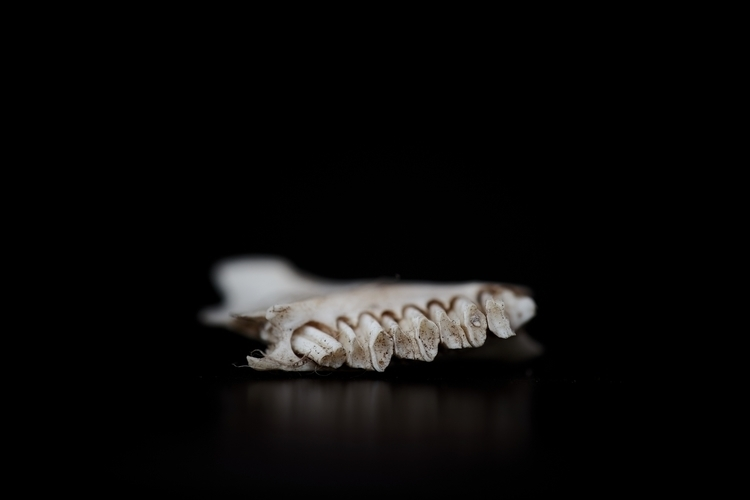 tooth, decay Body: Fujifilm XT - livelovedocument | ello