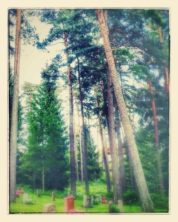 🌲 Skogskyrkogården Jönköping 📷  - skogskyrkogardar | ello