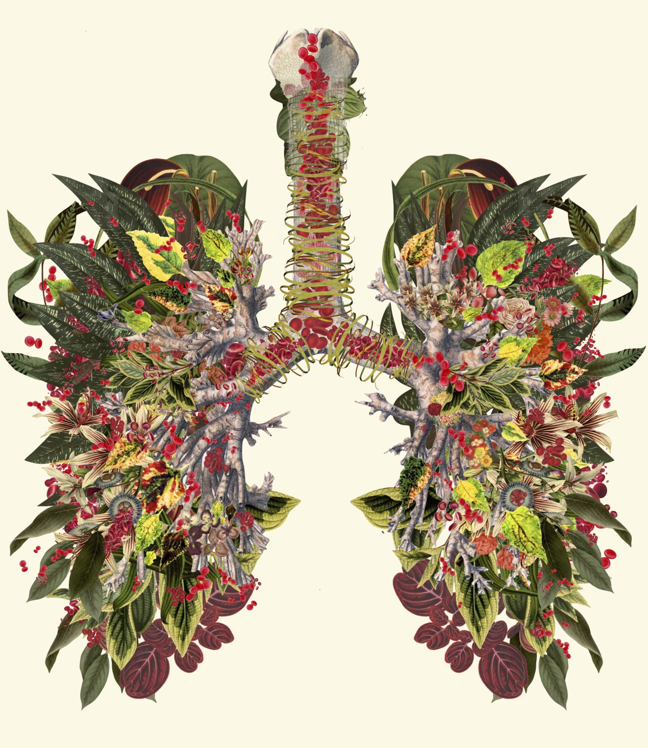 Anatomical Collages Travis Bede - mimi-cloud9 | ello