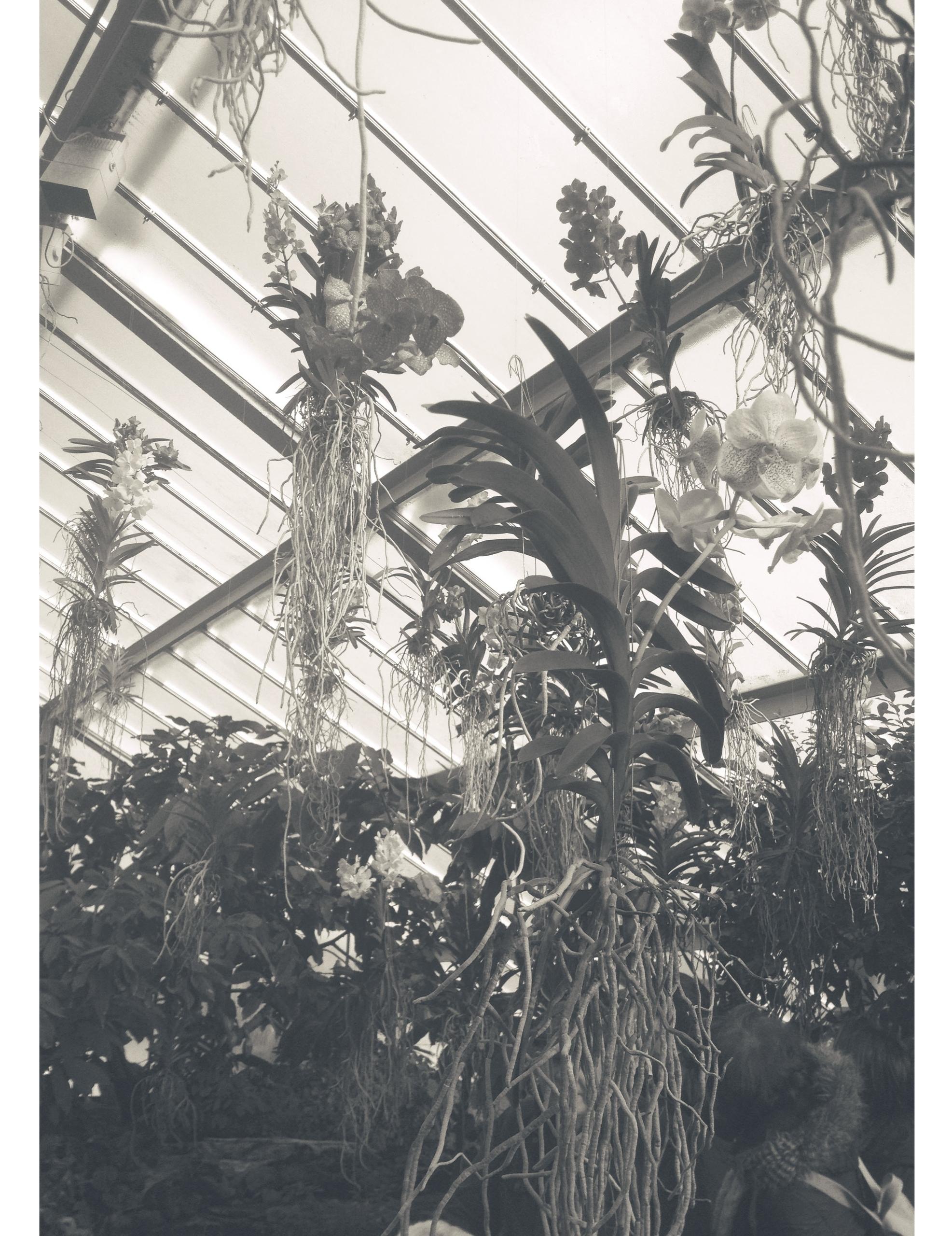 Kew Garden Orchidaceae // Londo - nitaboni | ello