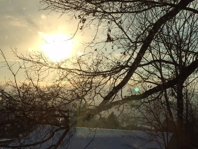 Sunset branches - mephit | ello
