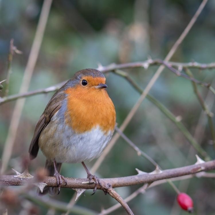 bird twig - bradverts   ello