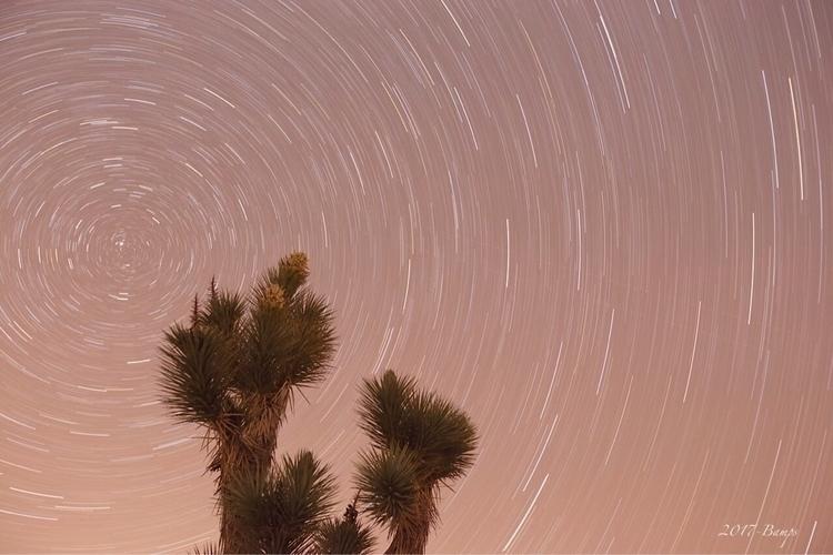 Yucca tree trails  - yucca_tree - bamps | ello