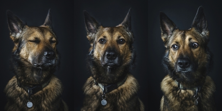 friend hes dog - photography, expressions - kalashnik | ello