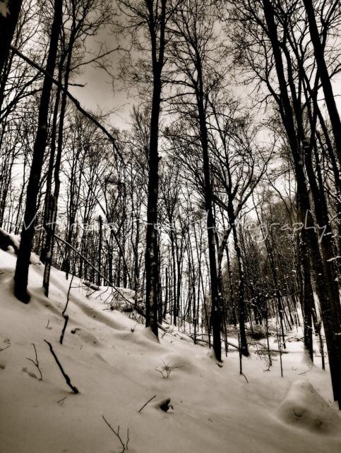 Peaceful Winter Woods - nature, natureisfree - natureisfree | ello