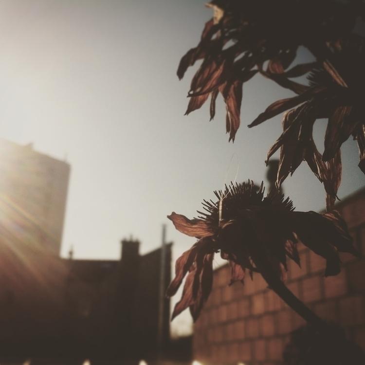 Rescapée Urbaine... Des Jardins - laureydesjardins | ello