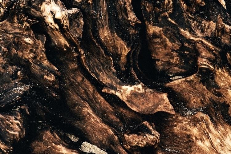 Diversity Driftwood II - driftwood - neonicecream | ello