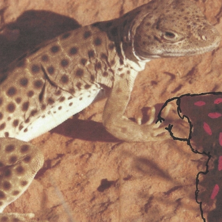 Lizard. replied Yuffie. terrori - littlefears | ello