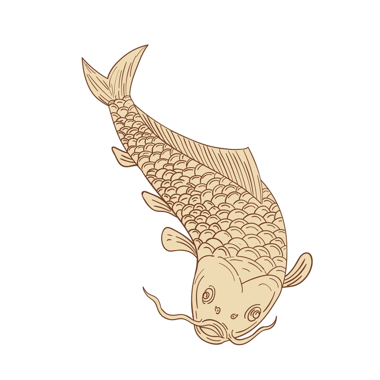 Diving - Koi, Nishikigoi, Carp, Drawing - patrimonio | ello