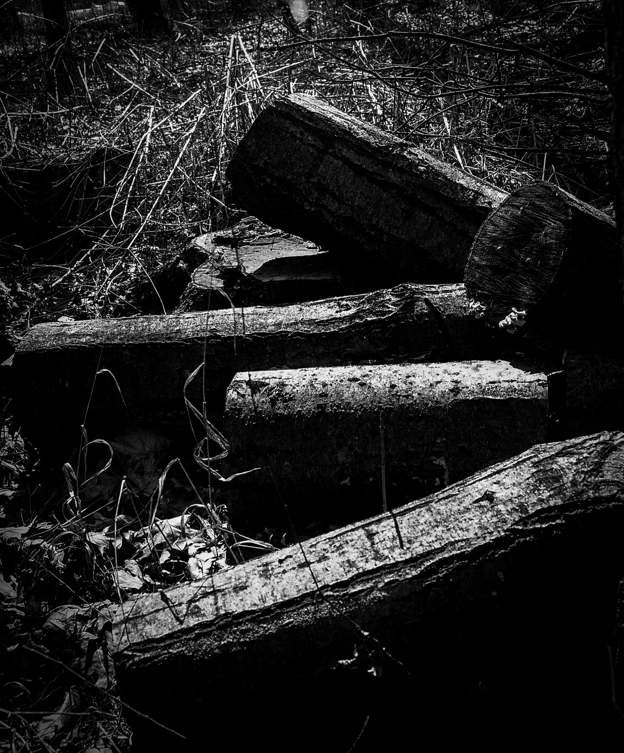 logs sun season growing long un - junwin | ello