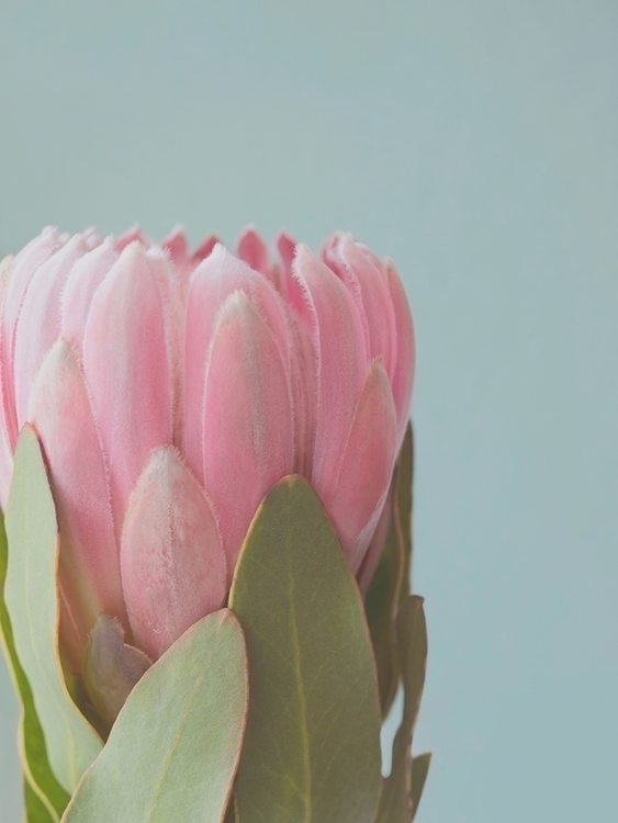 Pink Flower - nature, color, abstract - eugenie_s | ello