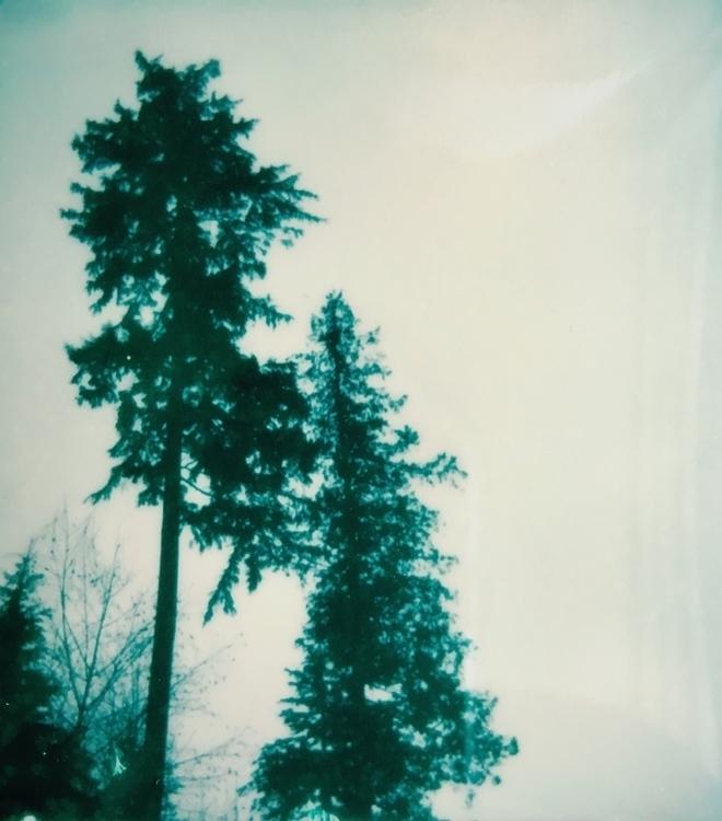 pines Kalamarz - polaroid, ellophotography - jkalamarz | ello