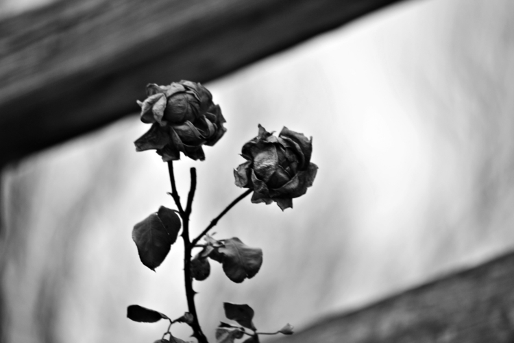 Winter blew - photography, texture - loloshfleatza | ello