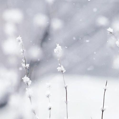 Haiku / winter pass — snow flow - kashyapi | ello