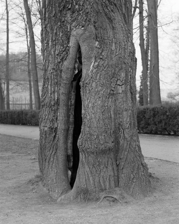 trees run Anne Erhad - phasesmag - phasesmag | ello