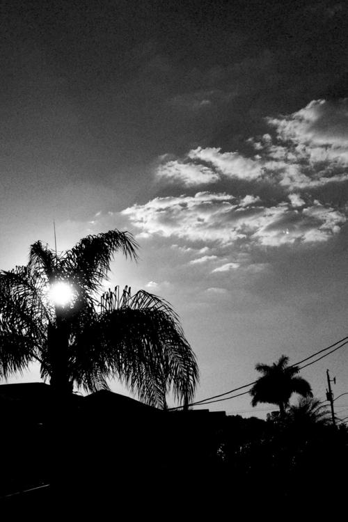 Sun Set Palm Tree Apps - mikefl99 - mikefl99 | ello