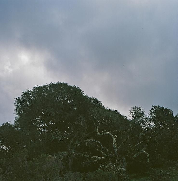 oaktree, shotonfilm, hasselblad - teetonka | ello