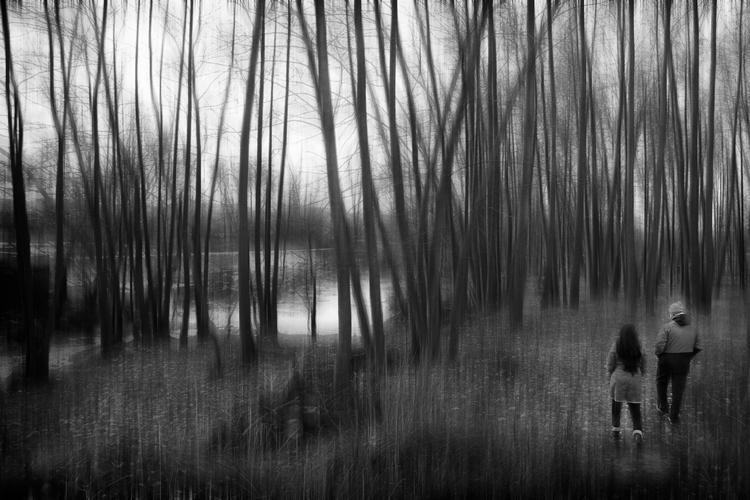 El aura del bosque - juancarlosgallego | ello