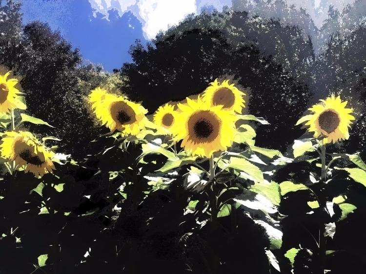 sun - sacrecour | ello