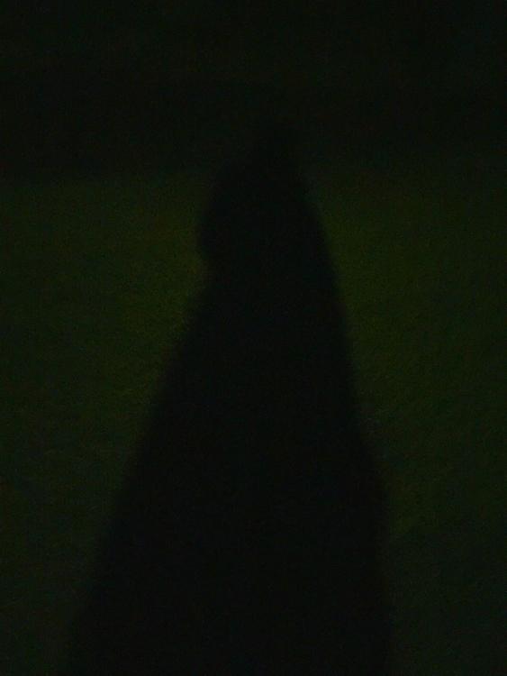 late night shenanigans - vegabond   ello