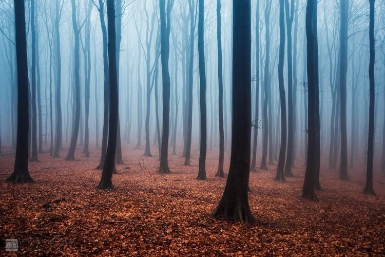 Fairytale haunting atmosphere f - phigun | ello