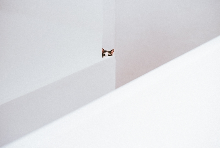 photograhy - cat, art, minimal, abstract - cataluna | ello