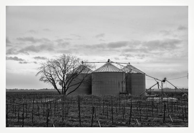 Vineyards, Elk Groove, CA - guillermoalvarez | ello