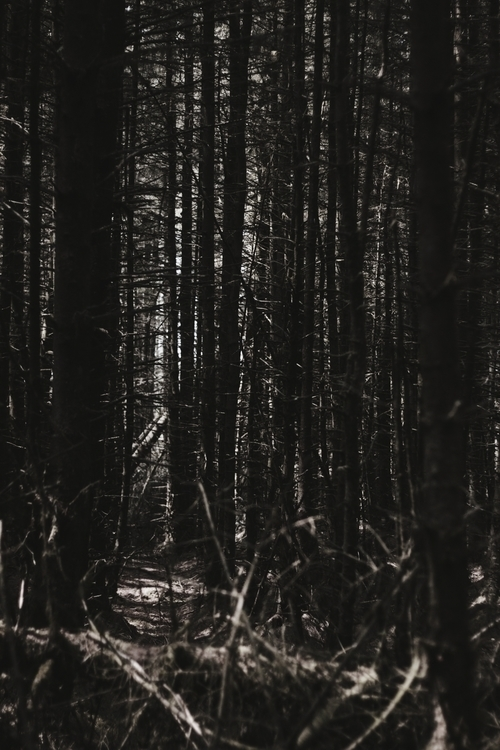 Ballyboley Forest, Northern Ire - skyler_brown | ello