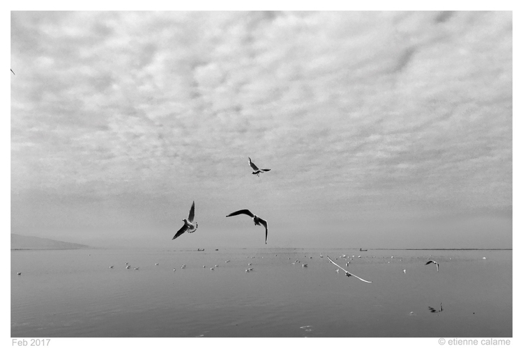 Seagulls front ready grab bread - etiennecalame | ello
