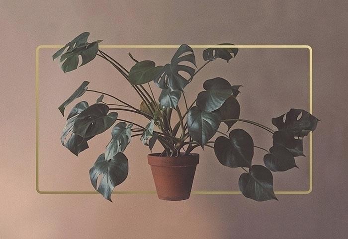 plant, organic, composition, gold - atatatanas | ello