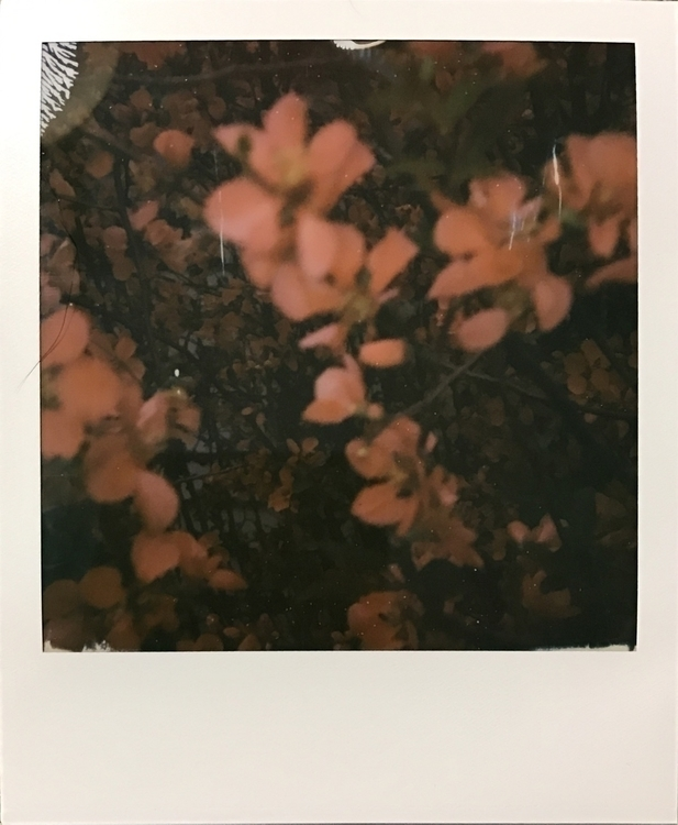 buy Impossible camera, gently $ - alienmeatsack | ello