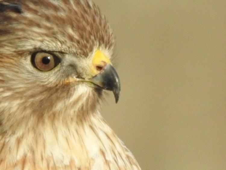 Birds feather  - edwinphotos | ello
