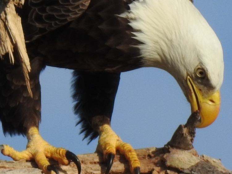 finished UK photos eagles nest  - edwinphotos | ello
