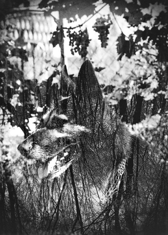 Wild. negatives - mo_photographer | ello