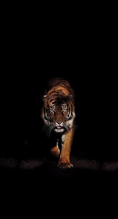 Lions - infinite134 | ello